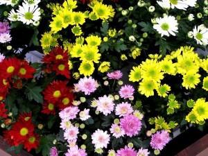 10 loại cây cảnh trồng trong nhà vừa đẹp vừa giúp lọc không khí cực tốt nên trồng ngay