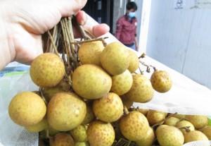 98% nhãn Việt Nam xuất khẩu là bán cho Trung Quốc