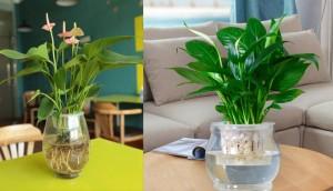 Những loại cây dễ trồng trong nhà giúp hút khí độc lại lợi phong thủy