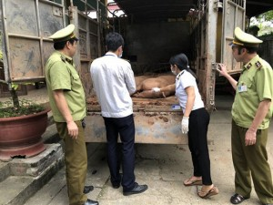 Thịt lợn Trung Quốc ồ ạt tuồn về Việt Nam do giá thịt lợn trong nước tăng