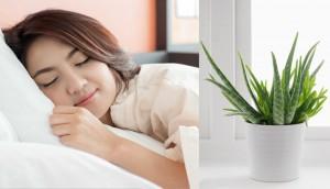 Ai khó ngủ thì nên trồng ngay những loại cây này trong phòng ngủ