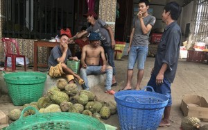 Giá hạt sầu riêng tăng gần 100.000 đồng/kg, tỉnh Lâm Đồng nói gì?