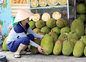 Nghe như chuyện ngược đời: Giá mít Thái tăng kỷ lục lại đâm lo
