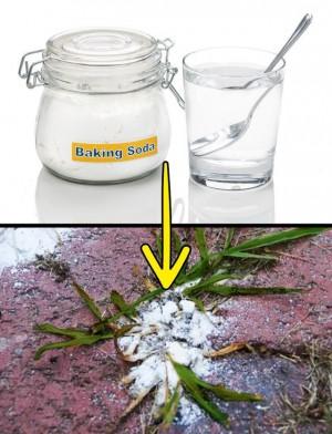 Sợ hãi thuốc diệt cỏ? Đừng lo lắng, bạn có thể diệt cỏ dại trong vườn nhà với những nguyên liệu thiên nhiên có sẵn này!