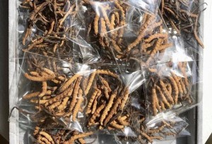 Thưởng trà 2,2 tỷ đồng/kg, đắt hơn vàng ròng: Thú xa xỉ của đại gia Việt