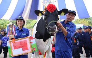 Cô bò cho 15 tấn sữa/năm chính thức đăng quang