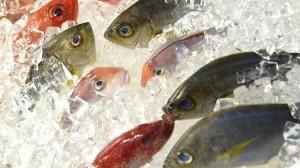 Cứ chọn cá theo mẹo này các mẹ khỏi lo mua nhầm cá ươn, cá bệnh