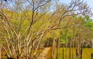 Rừng ngập mặn xứ Huế đẹp tuyệt vời khi vào thu