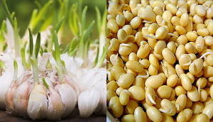 Tưởng vứt đi nhưng 4 thực phẩm này lại cho giá trị cực cao khi mọc mầm