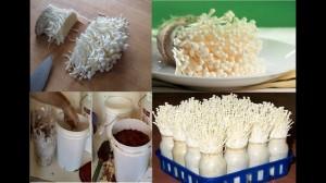Cách tự trồng nấm kim châm tại nhà vừa đơn giản lại an toàn