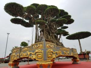 """Tuyệt tác siêu cây """"Đại thế vân tùng"""" dát vàng giá 15 tỷ đẹp cỡ nào?"""
