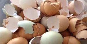 Vỏ trứng gà tưởng như vô dụng nhưng thực ra chữa được nhiều bệnh dưới đây