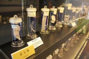 Bảo tàng kí sinh trùng khiến du khách sởn gai ốc