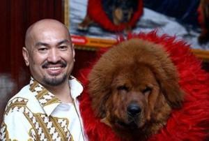 Ngao Tây Tạng: Từ thú cưng triệu đô đến con đường vào... lò mổ