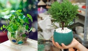 12 con giáp nên trồng cây gì trong năm mới để thu hút tài lộc?