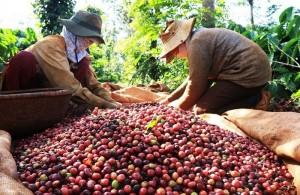Giá nông sản hôm nay 17/1: Giá cà phê tăng 200 đ/kg, giá tiêu giảm nhẹ