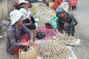 Giá tỏi Lý Sơn 'rớt thảm' trước Tết, nông dân khóc ròng