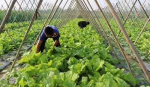 Thị trường nông sản tết: Dồi dào thực phẩm, trái cây ngon