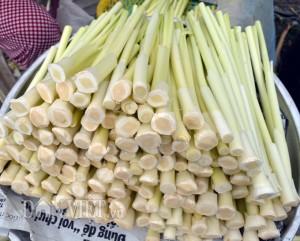 Cà Mau: Sau Tết, giá rau hoang dại này vẫn cao, kiếm nửa triệu/ngày