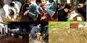 Phát hiện Dịch tả lợn Châu Phi ở Hưng Yên, Thái Bình