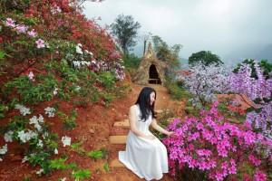 """""""Vương quốc"""" hoa đỗ quyên độc nhất Việt Nam"""