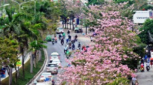 Không ngờ giữa Sài Gòn lại có