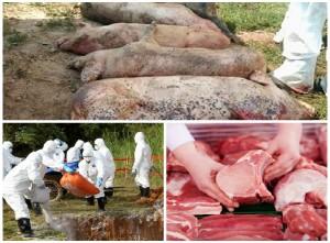 Lưu ý 'vàng' khi lựa chọn thịt lợn để tránh mua phải thịt bị dịch tả lợn châu Phi