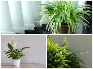 Trời nồm nên trồng cây này trong nhà để hút ẩm, hiệu quả bất ngờ