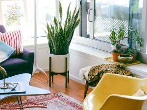 Điểm danh 5 loại cây cảnh giúp thanh lọc không khí trong nhà cực tốt