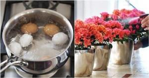 Lấy nước luộc trứng tưới cây, 7 ngày sau mẹ trẻ vỡ òa trước vườn hoa ngập sắc
