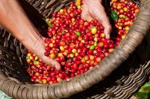 Giá nông sản hôm nay 22/5: Giá cà phê tăng 600 đ/kg, giá tiêu ổn định