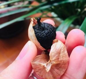 Hướng dẫn cách làm tỏi đen tại nhà đơn giản nhất