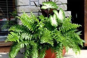 Làm sạch không khí trong nhà bằng cách trồng các loại cây xanh quen thuộc