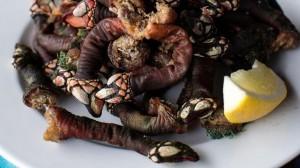 Loại hải sản ngon nhất thế giới: Ốc biển liu diu 3 triệu đồng/con