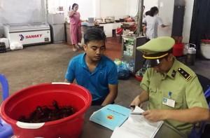 Quảng Ninh: Phát hiện và xử lý 02 trường hợp vi phạm kinh doanh tôm càng đỏ