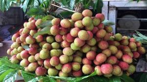 Vải đầu mùa tại TP.Hồ Chí Minh 100.000 đồng một kg