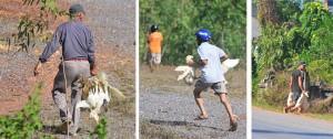 Lời chia sẻ bất ngờ của tài xế xe chở vịt bị hôi của ở Quảng Bình