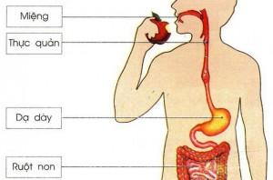 4 loại thực phẩm cực hại đường ruột chị em nên liệt vào
