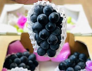 Lạ lùng nho rượu có tác dụng giảm máu nhiễm mỡ giá vài triệu đồng 1kg