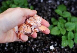 Mang thức ăn thừa ủ đúng chỗ này, 3 tháng sau cây mọc xanh um, hái mỏi tay không hết