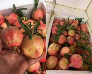 Những loại hoa quả Việt Nam đã hết mùa nhưng hàng Trung Quốc vẫn bán nhan nhản