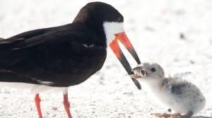 Từ bức ảnh chim mẹ mớm cho con ăn đầu lọc thuốc lá: Đừng coi môi trường là chiếc gạt tàn khổng lồ