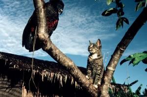 Úc: Bất ngờ loài vật