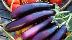 Cà tím có giá trị dinh dưỡng cao nhưng phải thận trọng khi sử dụng
