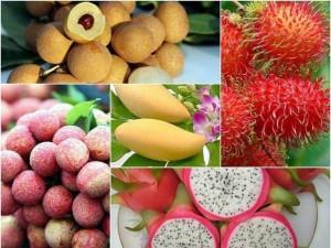 6 loại trái cây tươi ở Việt Nam đã được xuất khẩu thành công với giá bán