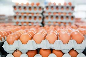 Bất ngờ đại gia thép Hòa Phát bán trứng gà đứng đầu miền Bắc