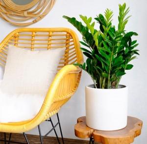 Muốn ngồi trong nhà cũng may mắn, hãy trồng ngay 5 cây này