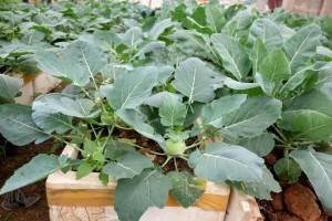 Tháng 9, phủ xanh sân thượng những loại rau này đảm bảo hái mỏi tay không hết