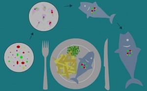 5 ảnh hưởng của vi nhựa trong thực phẩm tới sức khỏe con người