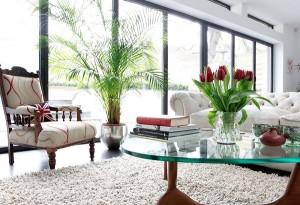 Cây xanh có thực sự giúp không khí trong nhà trong lành hơn?